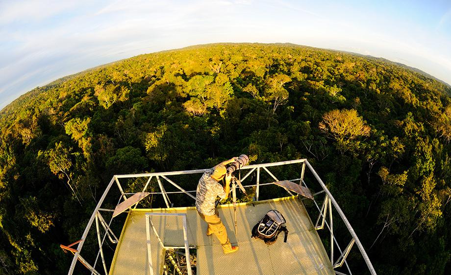 Torre de observação de pássaros e diversas espécies da região amazônica - Foto: Divulgação