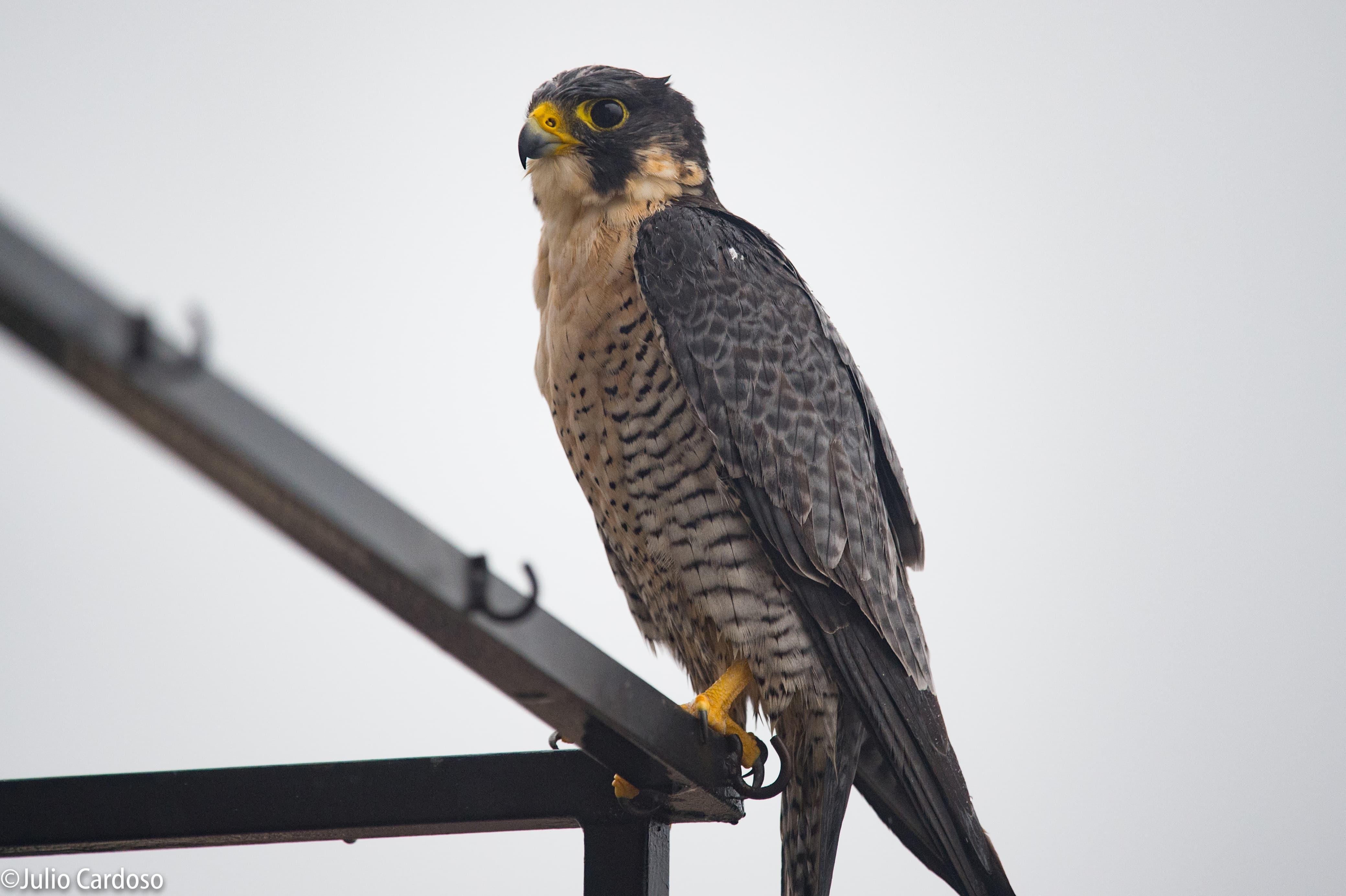 Como observar 464 espécies de aves em SP