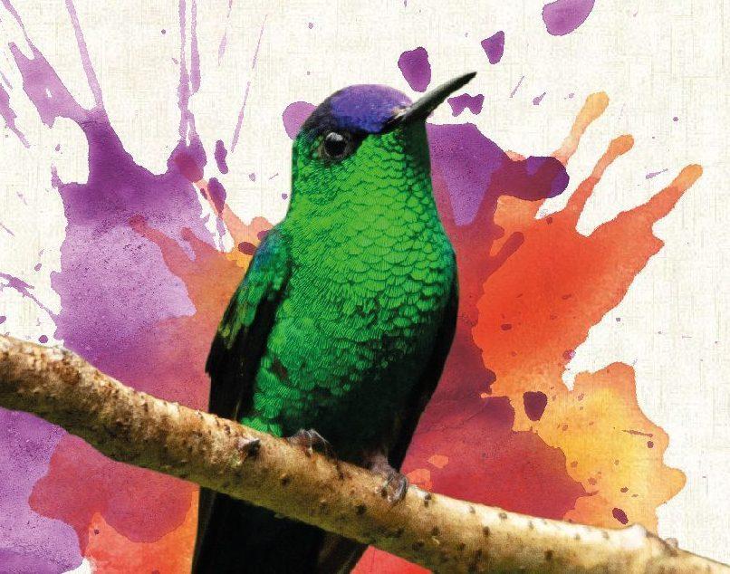 """Exposição """"Olha o passarinho"""" fica no Clube Pinheiros até 30 de setembro"""