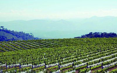 Vinhos brasileiros: um passeio por rótulos imprescindíveis da nossa terra