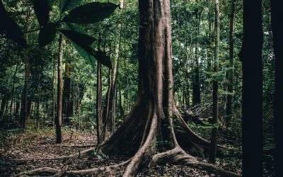 A biodiversidade brasileira precisa ser valorizada e conservada