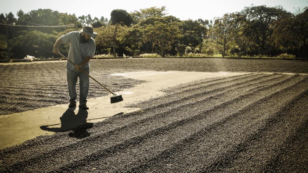 O terreiro de café na fazenda Terra Preta - Foto: Divulgação